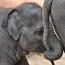 elefant_4_klein