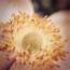 herbstanemone2_klein