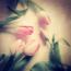 tulpen1_klein
