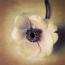 anemone2_klein