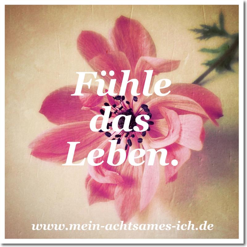 inspiration_fuehledasleben