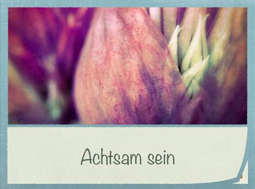 achtam_v500