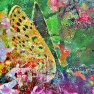 Woche 1: Tarzan und Schmetterling