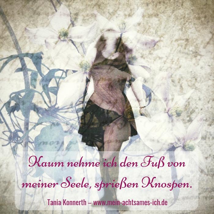 Knospen – Tania Konnerth